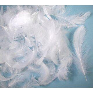 Gänsefedern weiß, 10 g, ca. 4 - 6 cm